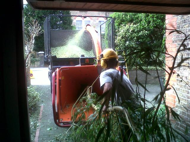 tree-removals-Manchester-area
