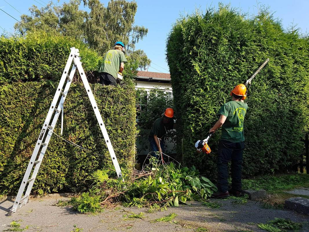 tree-removal-in-Manchester