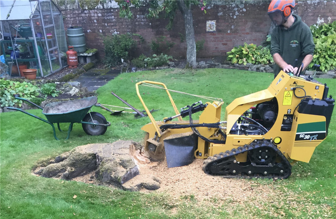 tree-stump-removals-Manchester