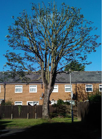 tree-removal-Manchester
